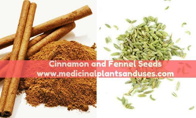 Cinnamon and Fennel Seeds for breast milk