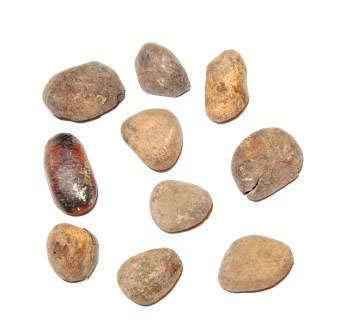 Hydnocarpus wightiana seeds