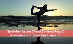 Santulan Asana (Yoga Balance Poses) - Method and Benefits