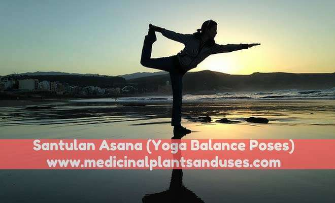 Santulan Asana (Yoga Balance Poses) - Method and Benefits