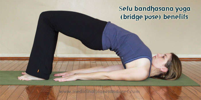 Setu bandhasana yoga (bridge pose) benefits, precautions and photos