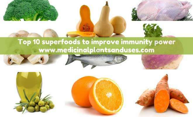 Top 10 superfoods to improve immunity power in adults and kids