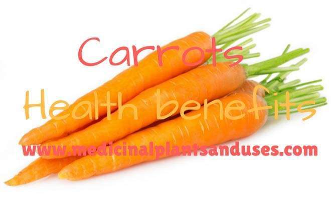 Top Health Benefits of Carrot