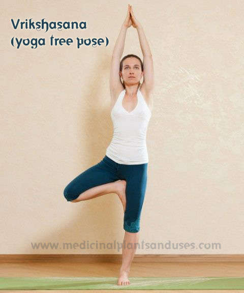 Vrikshasana yoga tree pose