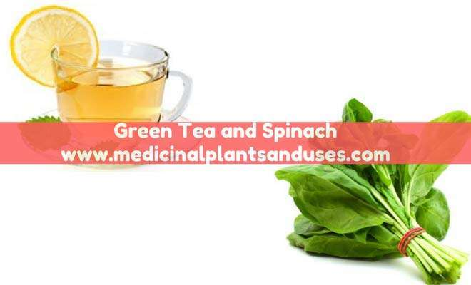 green tea spinach to lose weight