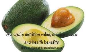Avocado: nutrition value, medicinal use and health benefits