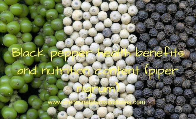 Black pepper health benefits and nutrition content (piper nigrum)