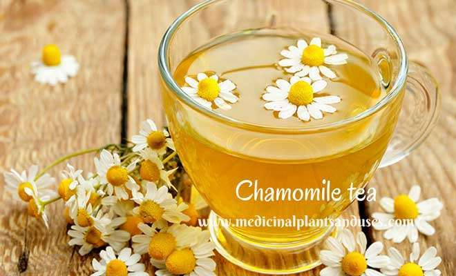 Chamomile tea for eczema