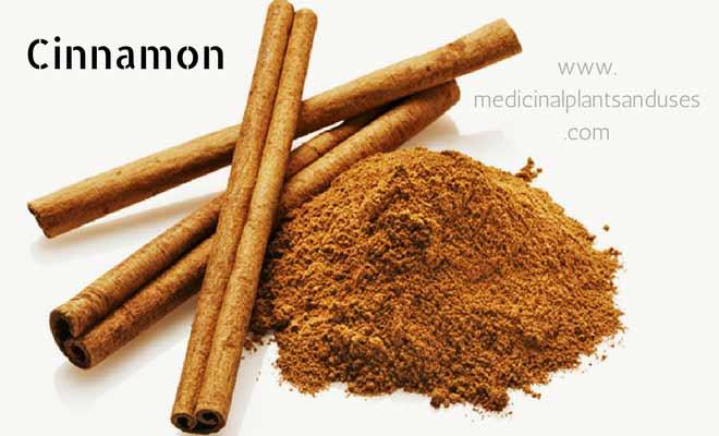 Cinnamon to cure acidity