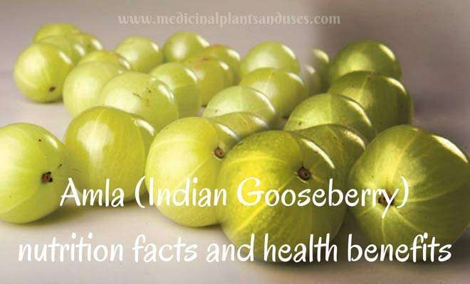 Amla (Indian Gooseberry) nutrition facts, health benefits and side effects
