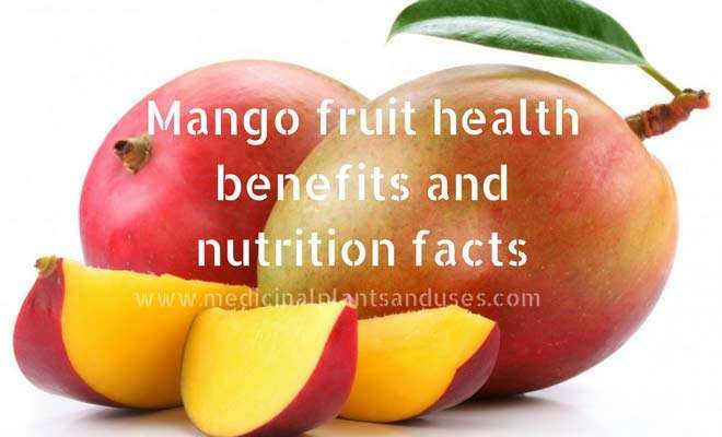 Mango fruit health benefits and nutrition facts