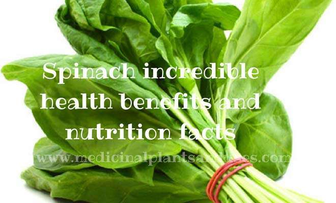 Spinach incredible health benefits and nutrition facts