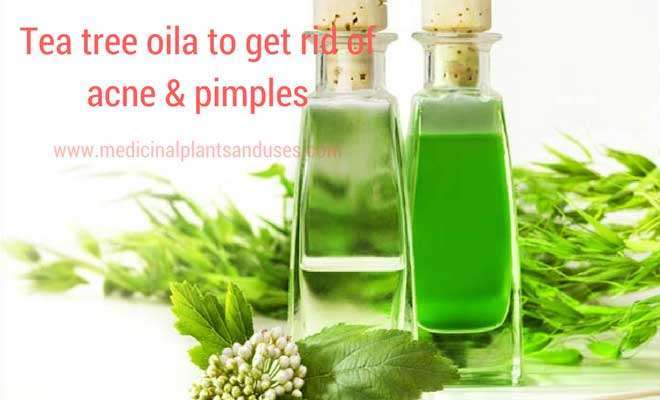 How to get rid of acne & pimples with home remedies in one day