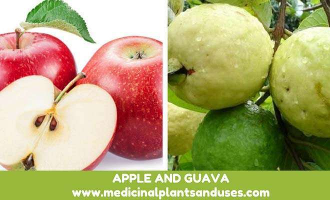 apple guava for diabetes cure