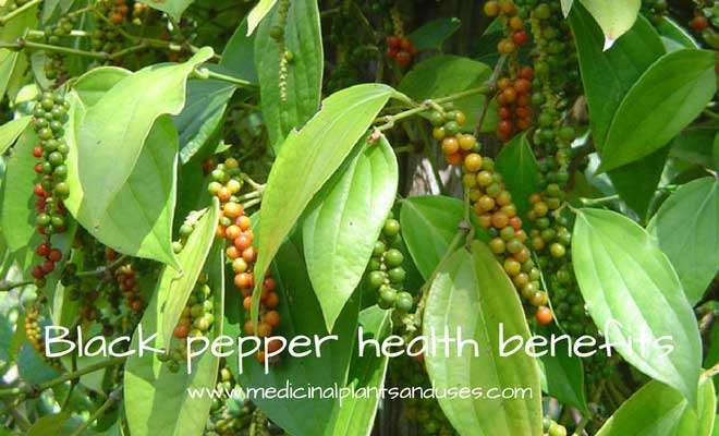 black peeper fruits peppercorn