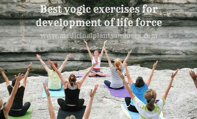 Best yogic exercises for development of life force