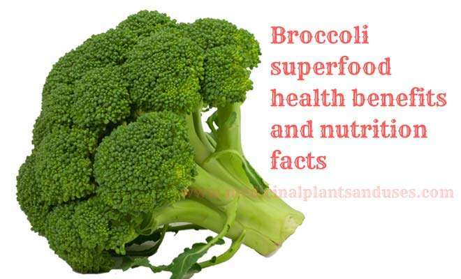 Broccoli health benefits and nutrition facts