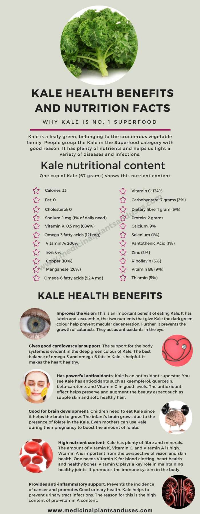 Kale health benefits and nutrition value