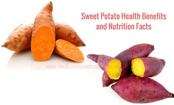 Sweet Potato Health Benefits and Nutrition Facts