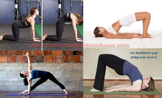 yoga asanas for arthritis and inflammation of joints