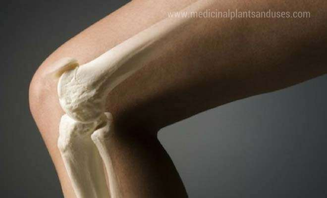 Best food for strengthening bones and energizing the body