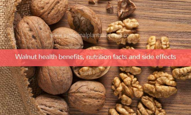 Walnut health benefits, nutrition facts and side effects