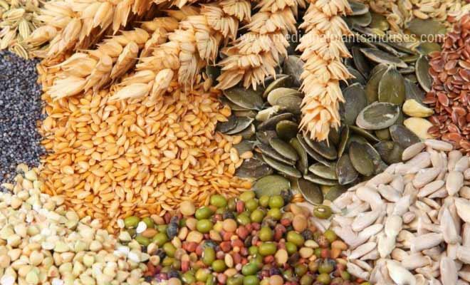 whole grains good for health and weight loss