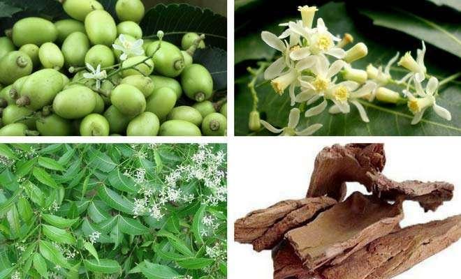 neem leaves flower fruit bark