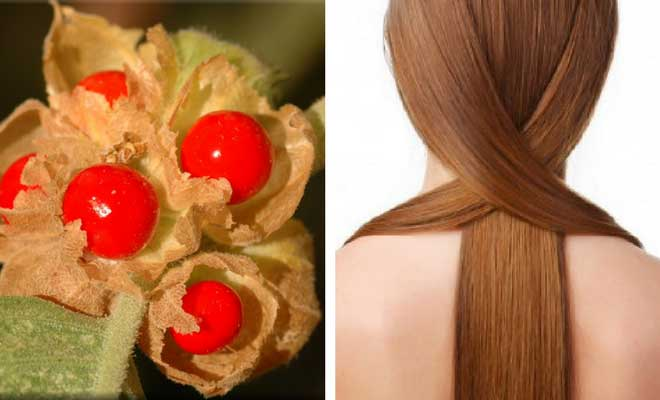 Ashwagandha benefits for weight loss and hair growth