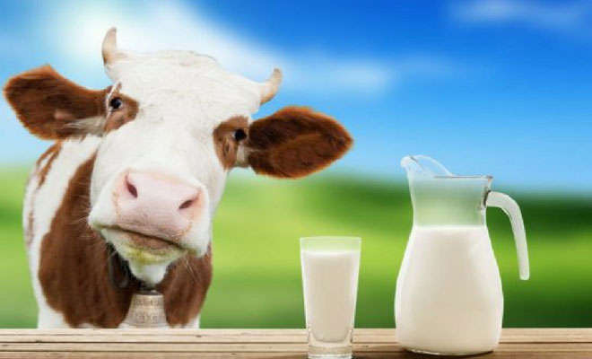 Cow milk nutrition facts and health benefits