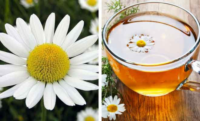 Chamomile flower and tea