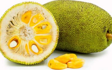 Jackfruit health benefits, nutrition facts and medicinal uses