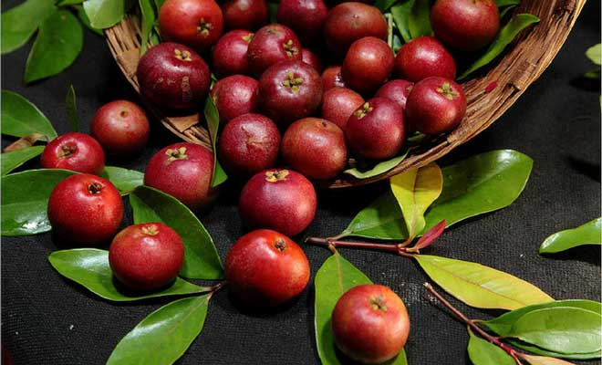Kokum health benefits, nutrition facts and side effects (garcinia indica)