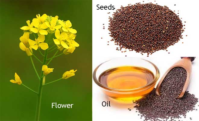 mustard oil, seeds and flower
