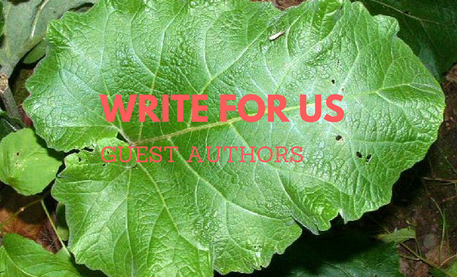 write for us guest author