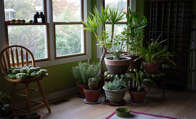 Syndromes and indoor plants