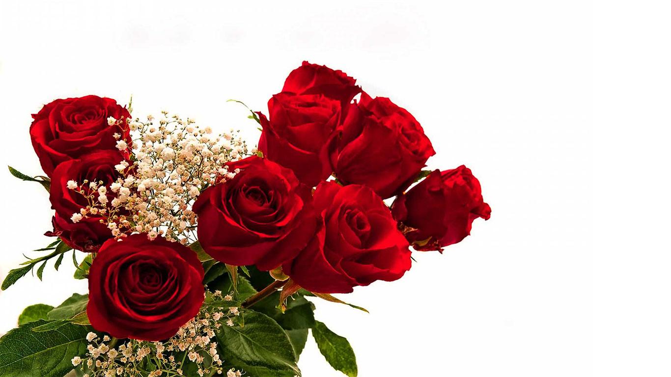 nice red rose image